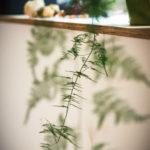 Ferns on the window ledge
